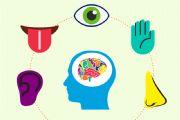 内感官类型测试